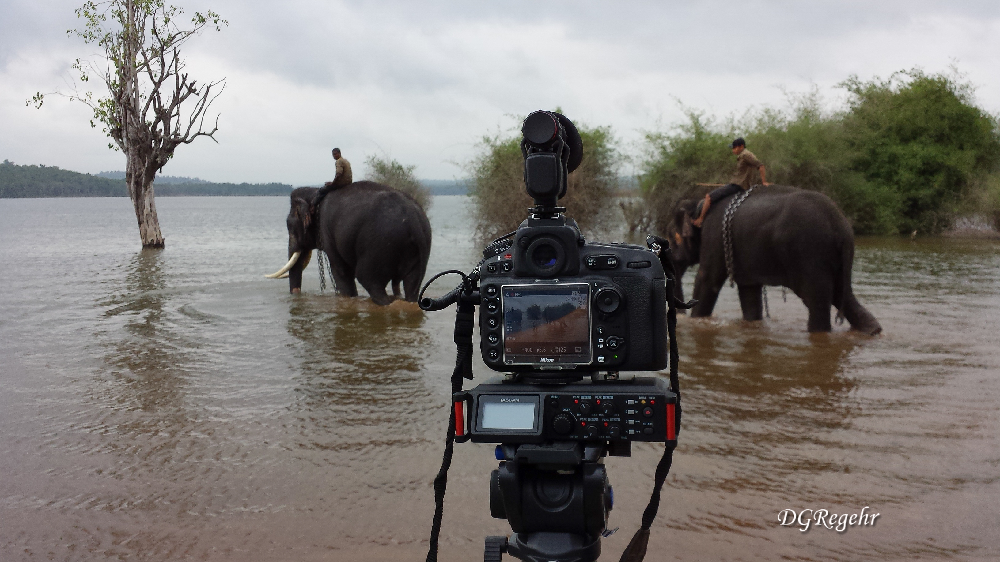 DR-70D with Elephants